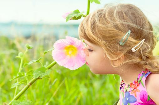 Curious little girl smells a flower